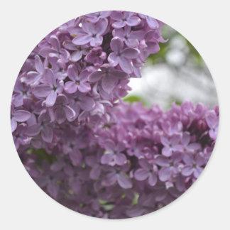 Lilac Blossoms Classic Round Sticker