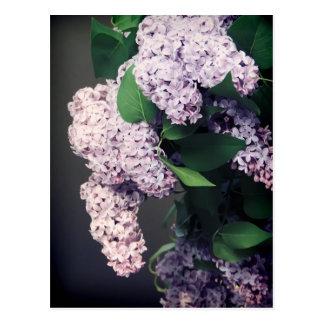 Lilac Bouquet with Vignette Postcard