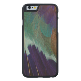 Lilac Breasted Roller feathers Carved Maple iPhone 6 Case
