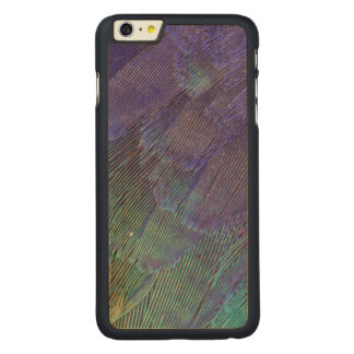 Lilac-breasted Roller feathers Carved Maple iPhone 6 Plus Case