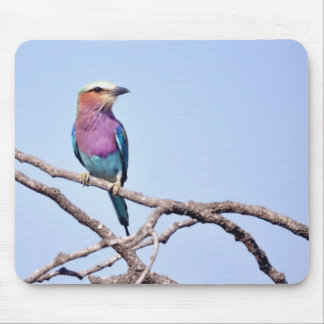 Lilac-breasted Roller Mouse Pad