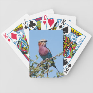 Lilac-breasted Roller Poker Deck