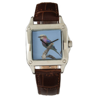 Lilac Breasted Roller Watch
