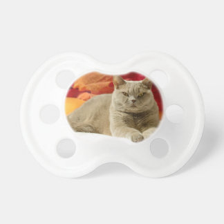 Lilac british shorthair cat pacifiers