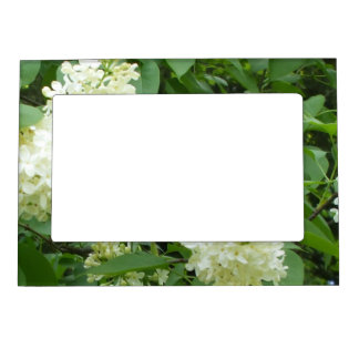 Lilac Bush for   Grandparents on Their Day Photo Frame Magnets