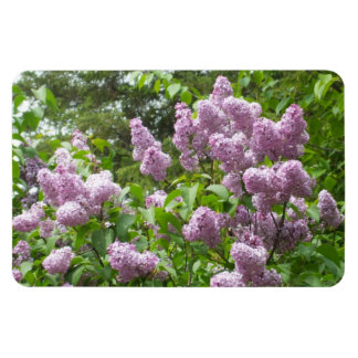Lilac Bush Rectangular Photo Magnet
