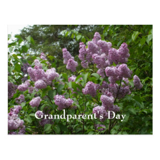 Lilac Bush-Syringa-Flowering Woody Plants Postcard