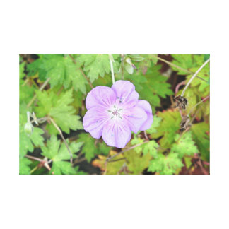 Lilac Flower Canvas