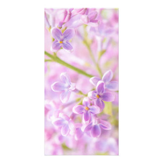 Lilac Flowers Mist Photo Cards