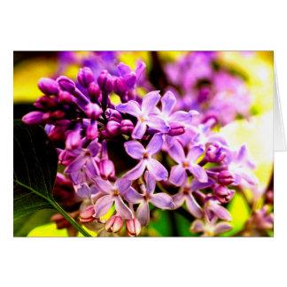 Lilac macro card