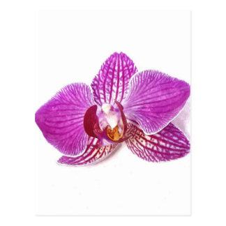 Lilac phalaenopsis floral botanical aquarel postcard