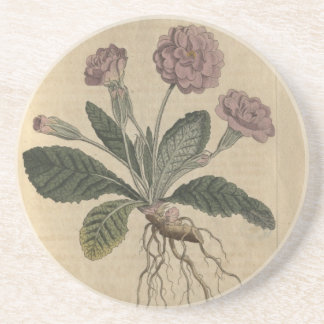 Lilac Primrose Coaster