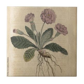Lilac Primrose Tile