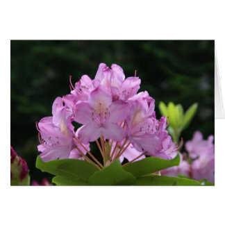 Lilac Rhododendron Card