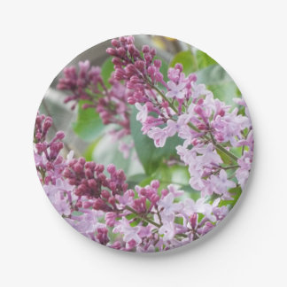 Lilac Spring paper Plates
