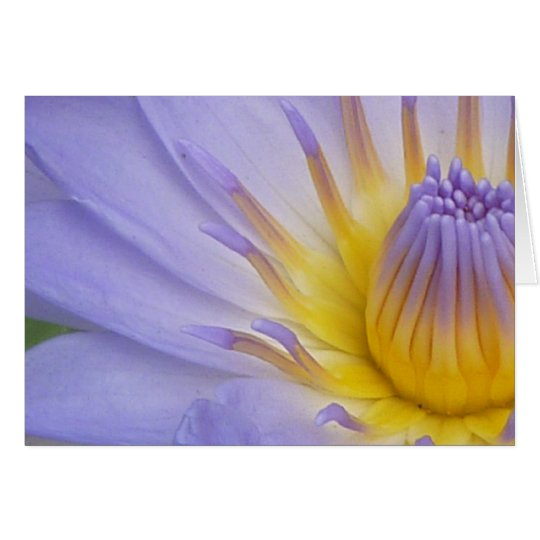 Lilac Waterlily Notecard