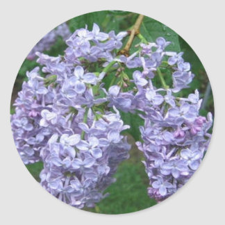 Lilacs for Mother's Day Sticker