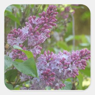 Lilacs Square Sticker