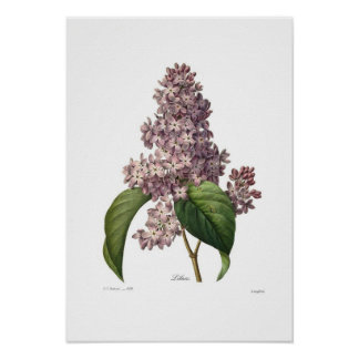 Lilas Affiches