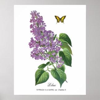 Lilas botanique affiche