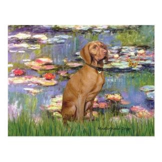 Lilies #2 - Vizsla 2 Postcard