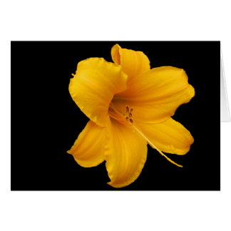 Lilies and Daffodils Greeting Card