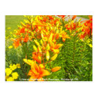 Lilies at Highland Park Fountain, Pittsburgh PA Postcard
