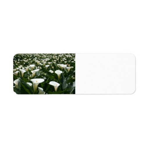 Lilies growing at Calla Lily Plantation, Taiwan Return Address Labels