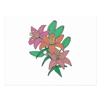 Lilies Postcard