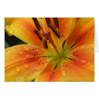 Lillies in the Rain Card