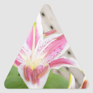 Lilly for a Cure... Breast Cancer Awareness Triangle Sticker