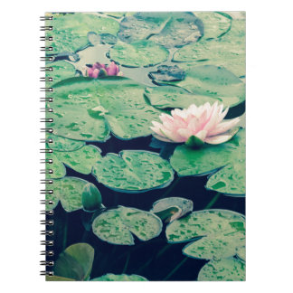 Lilly pad crossprocess2 notebooks