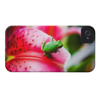 Lily and the Tree Frog iPhone 4 Cover