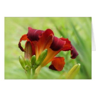 Lily Back - Daylily Card