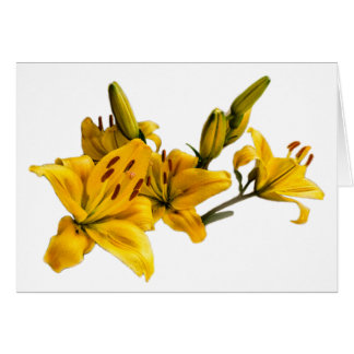 Lily flower card