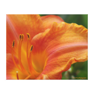 Lily in Orange Canvas Print