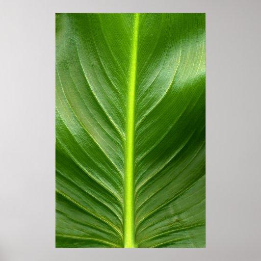 Lily Leaf Poster