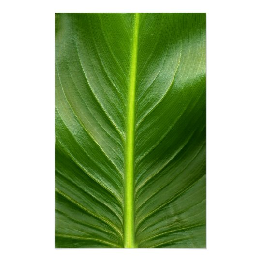 Lily Leaf Poster