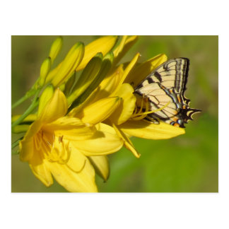 Lily Lover - Butterfly Postcard