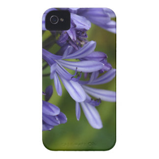 Lily of the Nile  (Agapanthus sp.) Case-Mate iPhone 4 Case