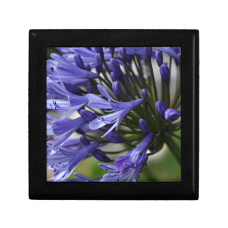 Lily of the Nile  (Agapanthus sp.) Trinket Boxes
