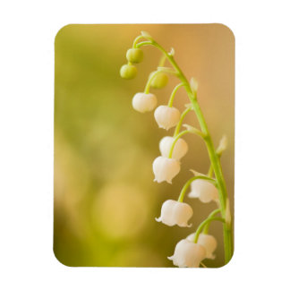 Lily of the Valley at Sunrise Magnet