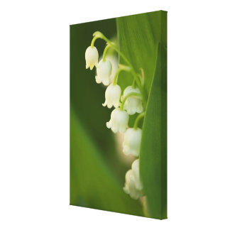 Lily of the Valley Flower Canvas Print
