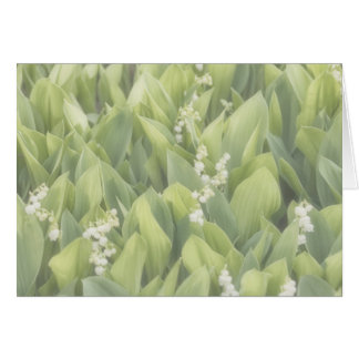 Lily of the Valley Flower Patch in Fog Card