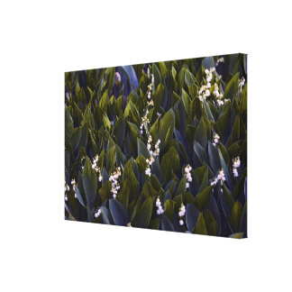 Lily of the Valley Flower Patch with Blue Tint Canvas Print