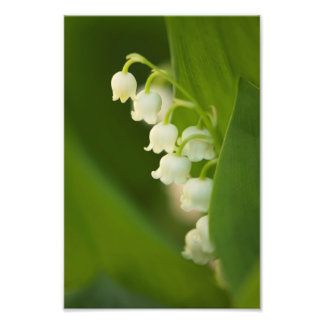 Lily of the Valley Flowers Photo Print