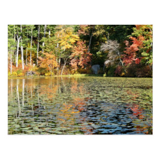 Lily Pad Cove on Whitney Pond Postcard