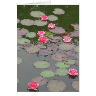 Lily Pad Note Card