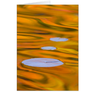 Lily pad on orange water, Canada Card