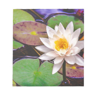 Lily pad on the water